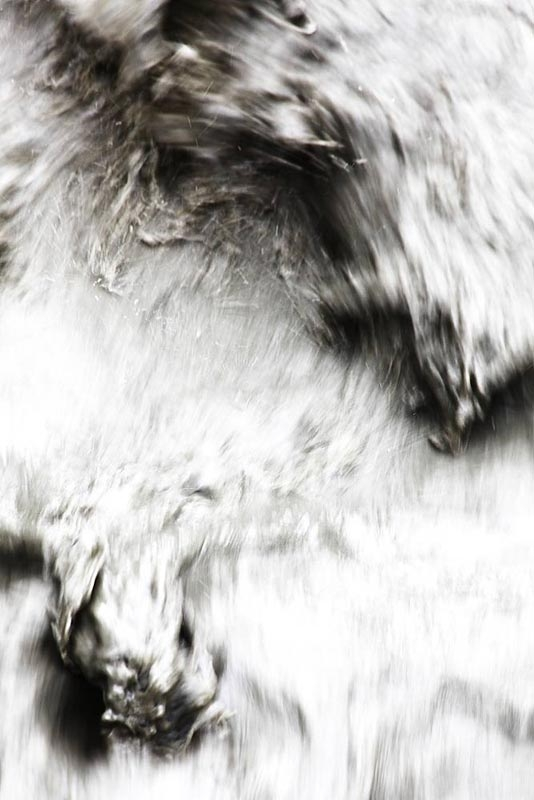 http://peterbraunholz.de/files/gimgs/th-15_IMG_1324_creatures_pbraunholz.jpg
