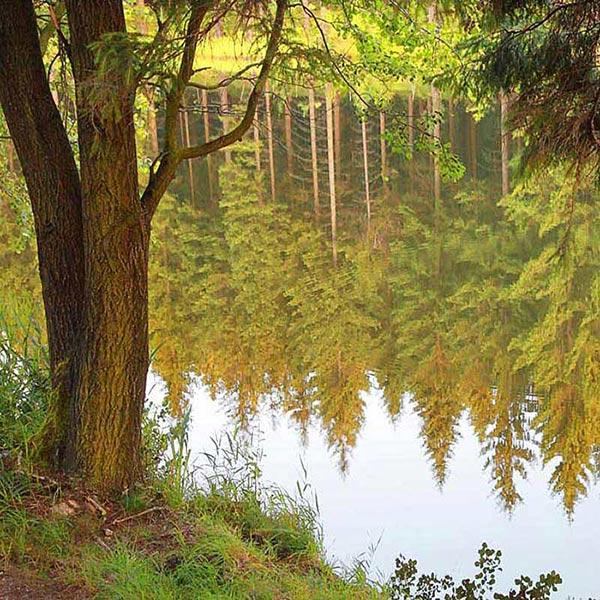 http://peterbraunholz.de/files/gimgs/5_boyyouturnedmeiv50x505389pbraunholz.jpg